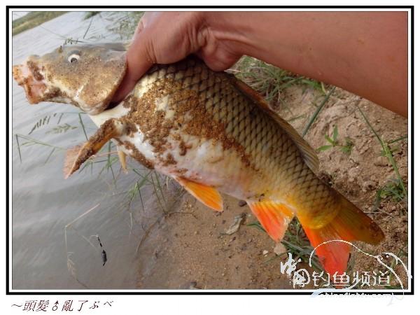 九头鱼十字绣图片