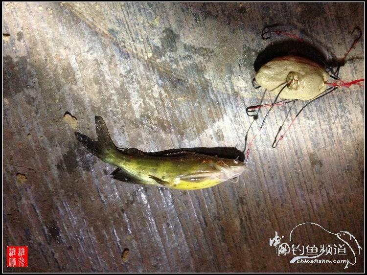 海杆钓鲫鱼技巧图解
