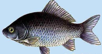 冬季吃鱼好季节 养生进补营养高