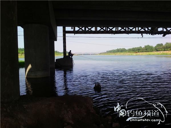 沙河桥下试钓