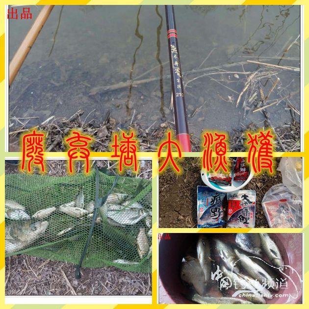 废弃塘大渔获