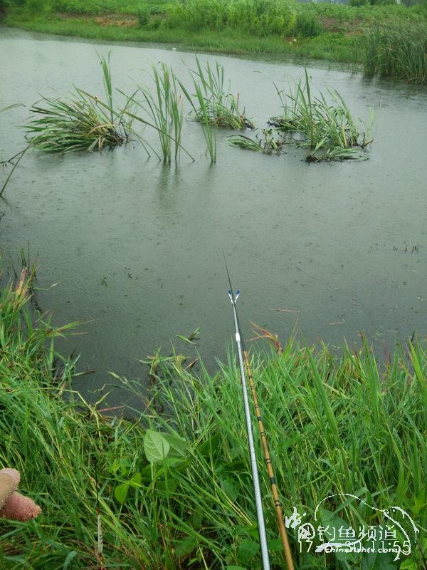 6.30  很久没钓鱼  下雨也