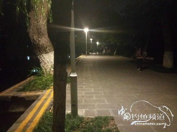 2017夜钓日记(34)