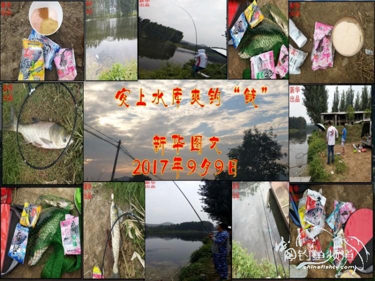 """安上水库爽钓""""鲢"""""""